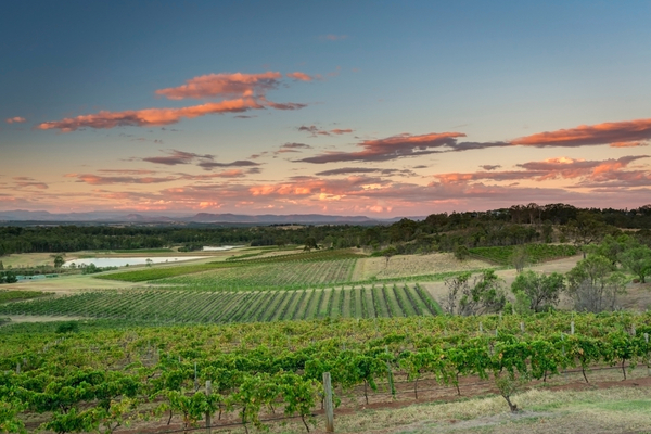 Hunter Valley vineyards, NSW, Australia